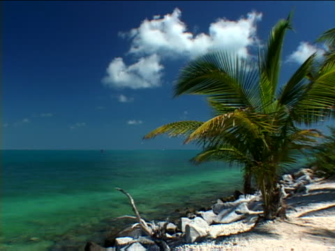key west: fort taylor - fan palm tree stock videos & royalty-free footage