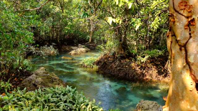 khlong song nam ,krabi unseen in thailand - viziarsi video stock e b–roll