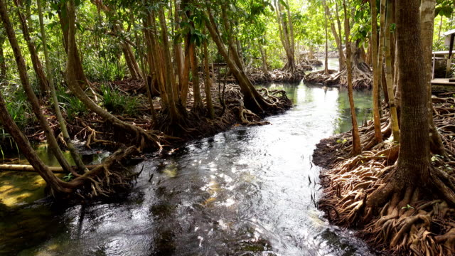 Khlong song nam ,Krabi unseen in Thailand
