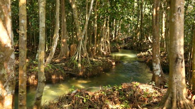 クロン歌 nam、クラビ タイで目に見えない - 湿地点の映像素材/bロール