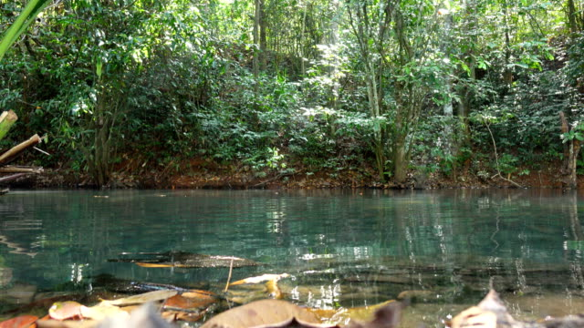 khlong song nam ,krabi unseen in thailand - flowing stream stock videos & royalty-free footage