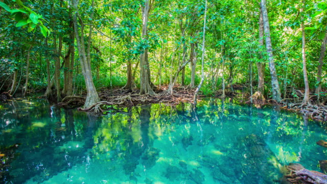 khlong song nam ,krabri unseen thailand. - mangrove forest stock videos & royalty-free footage
