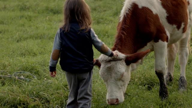 vidéos et rushes de kid et une vache - vache