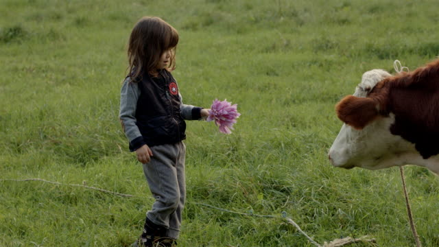 Kid and a Cow