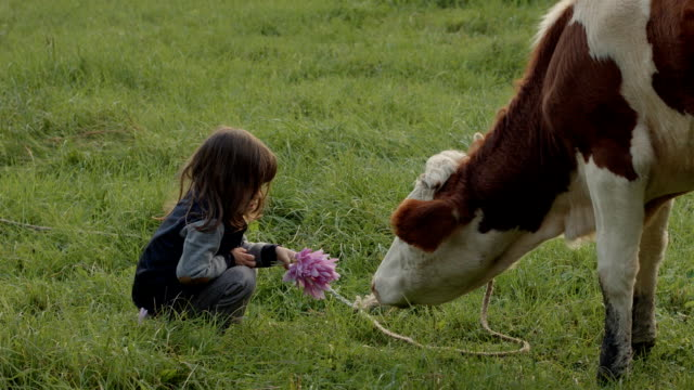 kid and a cow - cow stock videos & royalty-free footage
