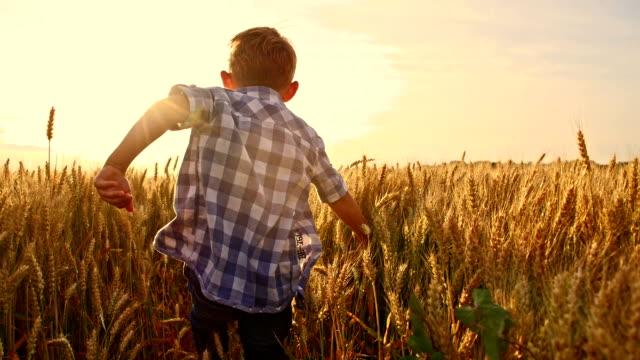 slo mo お子様に楽しいランニングの小麦のフィールド - 少年点の映像素材/bロール