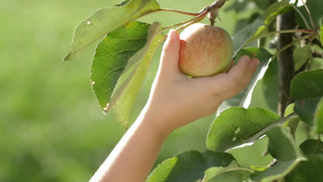 kid of two picked an apple - picking harvesting stock videos & royalty-free footage