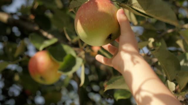 vídeos de stock, filmes e b-roll de criança de dois a dedo uma maçã - pegando frutos