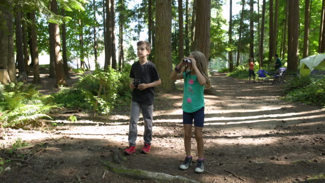 kids bird watching in forest - osservare gli uccelli video stock e b–roll