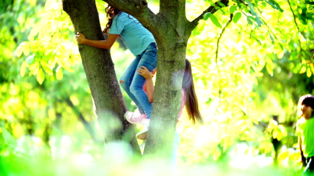 Kids climbing up a tree.