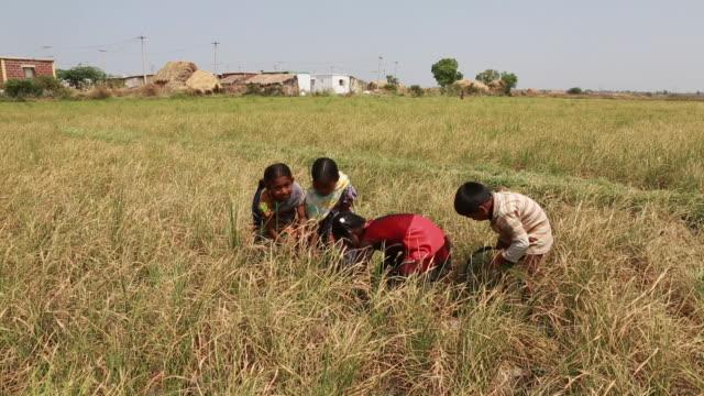Kids cutting plants on a ricefield near Pannur, India