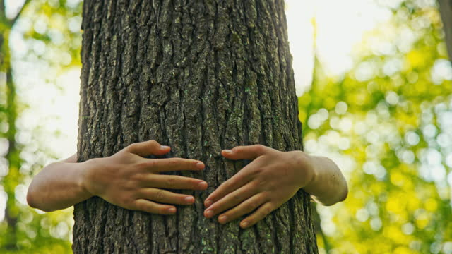 slo mo kids embracing tree trunks in the forest - anonymous activist network stock videos & royalty-free footage