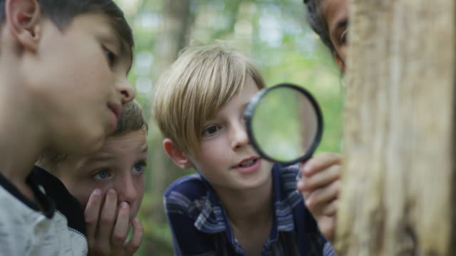 kids exploring the forest together - magnifying glass stock videos & royalty-free footage
