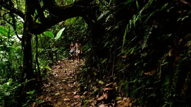 緑豊かな熱帯雨林でハイキングする子供たち - rainforest点の映像素材/bロール