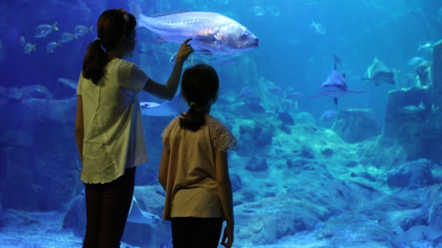 kids looking at fish in a huge aquarium - aquarium stock videos & royalty-free footage