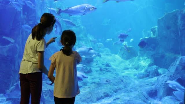 Kids looking at fish in a huge aquarium