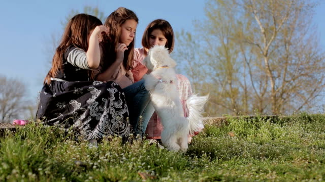 kids play with puppy - pampered pets stock videos and b-roll footage