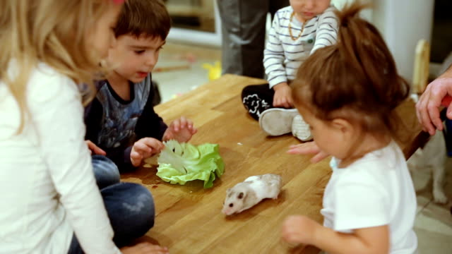 kids playing with hamster on a table - birthday stock videos and b-roll footage