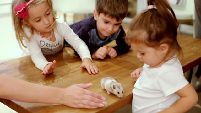 vídeos y material grabado en eventos de stock de niños con hamster en una mesa - hamster