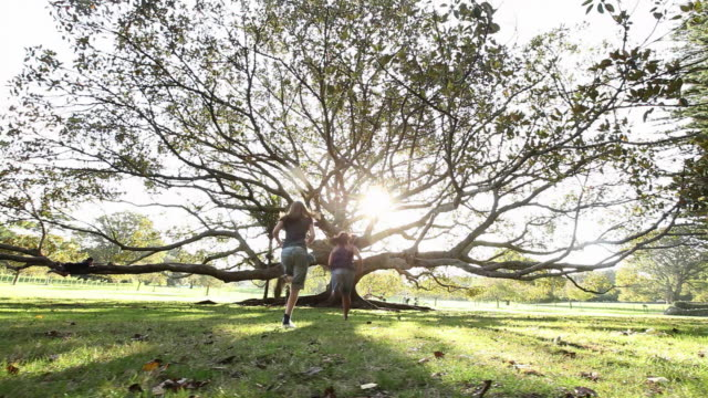 ws ds kids running towards fig tree by late afternoon sun / auckland, new zealand - new zealand stock videos & royalty-free footage