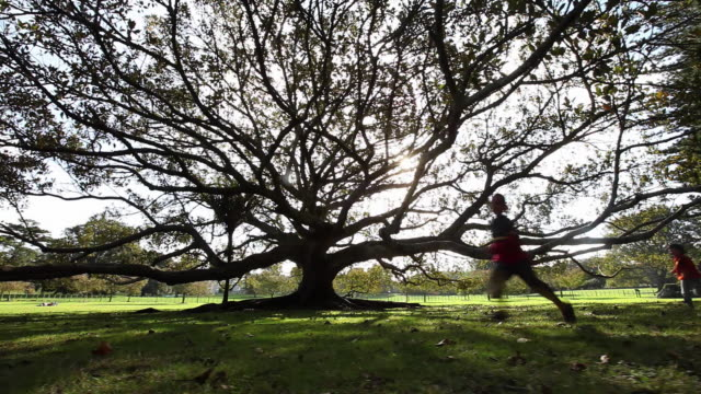 ws ds kids running towards fig tree by late afternoon sun / auckland, new zealand - boys stock videos & royalty-free footage