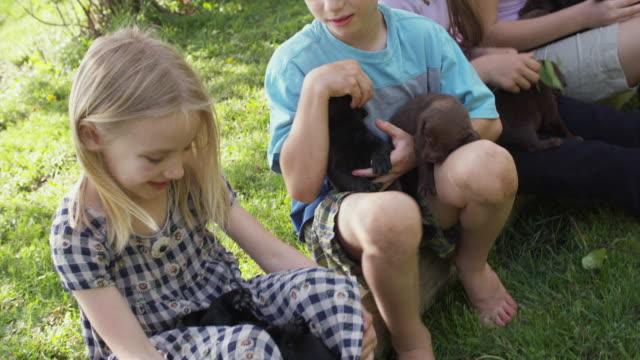 ms kids (4-13) sitting on grass with holding puppies / sunderland, vermont, usa - mittellanges haar stock-videos und b-roll-filmmaterial