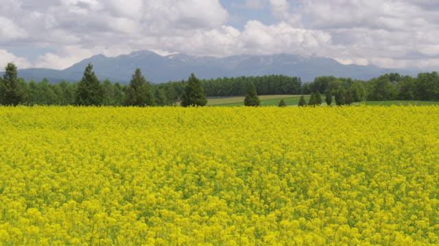 kikarashi field in biei, hokkaido, japan - hokkaido stock videos & royalty-free footage