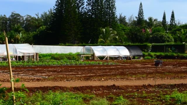 Kilauea Kauai Hawaii organic local farm for healthy diet farming 4K