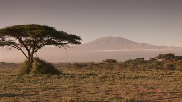 kilimanjaro - kenya stock videos & royalty-free footage