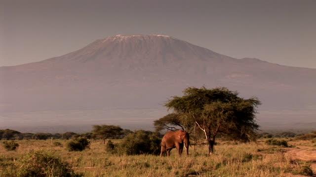 kilimanjaro - mt kilimanjaro stock videos & royalty-free footage