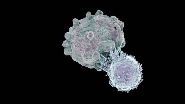 killer t- lymphocyte attacking a cancer cell - 白血球点の映像素材/bロール