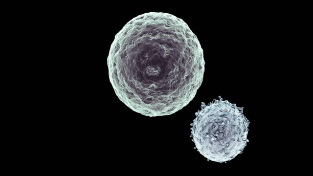 killer t-lymphocyte approaching cancer cell - magnification stock videos & royalty-free footage