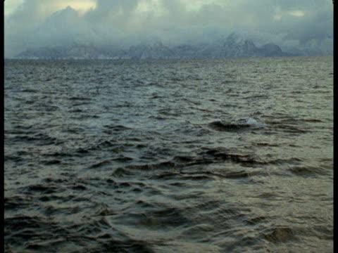a killer whale flukes in the atlantic ocean. - lobtailing stock videos & royalty-free footage