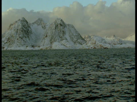 stockvideo's en b-roll-footage met a killer whale surfaces near snowy glaciers in norway. - rugvin
