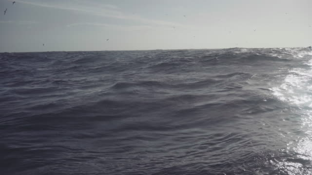 killer whales in the norwegian sea - diving into water stock videos and b-roll footage