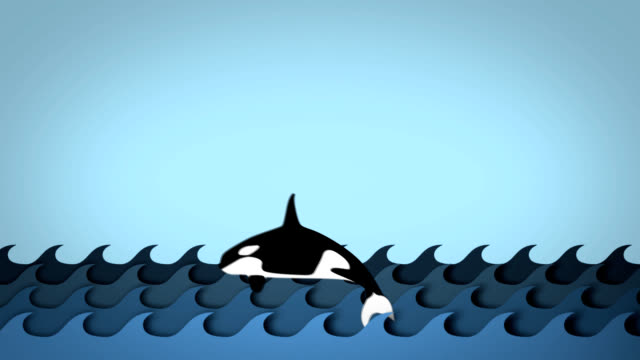 killer whales jumping over the waves - killer whale stock videos & royalty-free footage