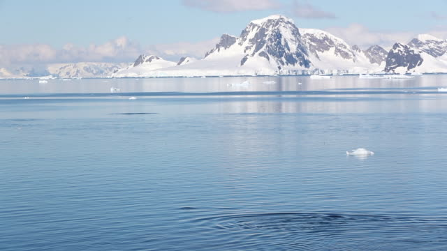 Killer Whales with mountain backdrop in Antarctica