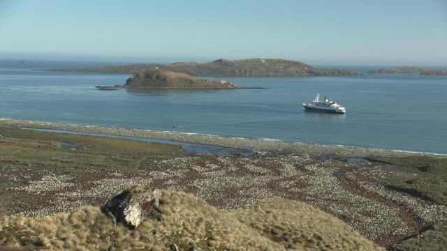 ws, ha, king penguin (aptenodytes patagonicus) rookery, zodiac boat heading to beach from ship anchored in bay, south georgia island, falkland islands, british overseas territory - anchored stock-videos und b-roll-filmmaterial