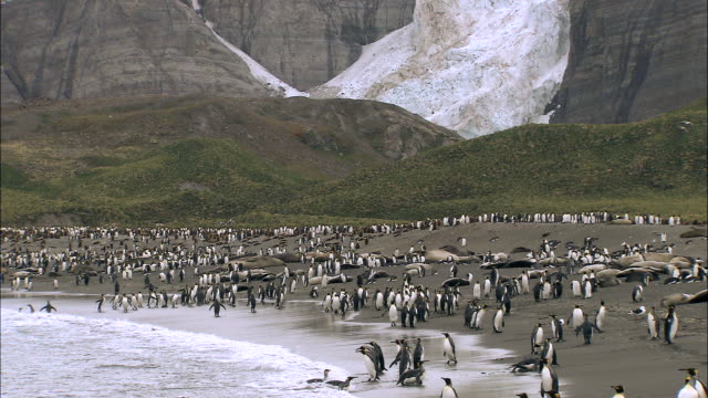 WS king penguins and elephant seals colony AUDIO / Gold Harbour, South Georgia, Antarctica