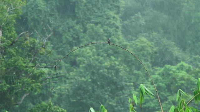 Kingfisher bird in the rain