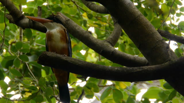vídeos de stock, filmes e b-roll de kingfisher pássaro - boca animal