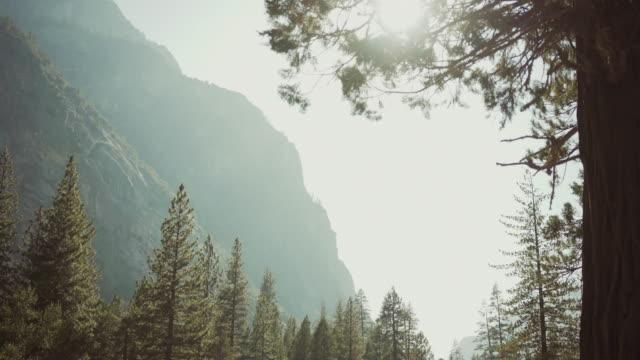 vidéos et rushes de parc national de kings canyon, californie - séquoia géant