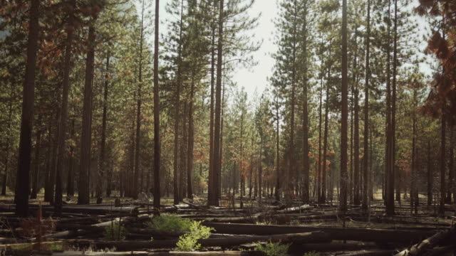 kings canyon national park, california - giant sequoia stock videos and b-roll footage