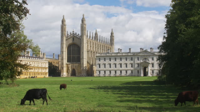 vídeos de stock, filmes e b-roll de king's college cambridge. cattle graze in the foreground. - king's college cambridge