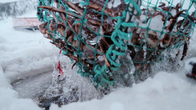 slo mo king's crab fishing - sea life stock videos & royalty-free footage