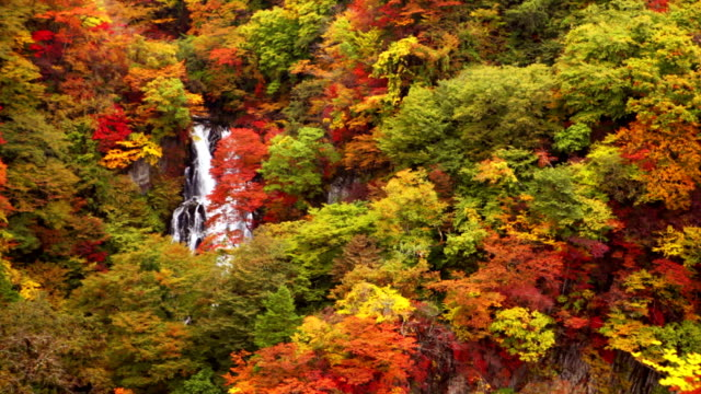 kirifuri falls near nikko, japan in autumn - autumn leaf color stock videos and b-roll footage