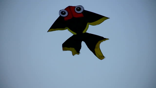 Kite goldfish.