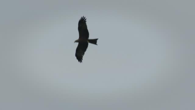 kite in the sky - 2匹点の映像素材/bロール