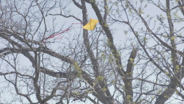 kite stuck in a tree - kite toy stock videos and b-roll footage