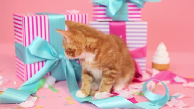 Kitten and birthday gifts